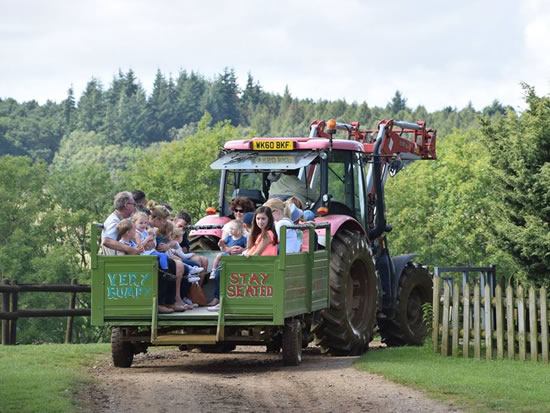 Dorset Heavy Horse Farm Park - Tractor and trailer rides